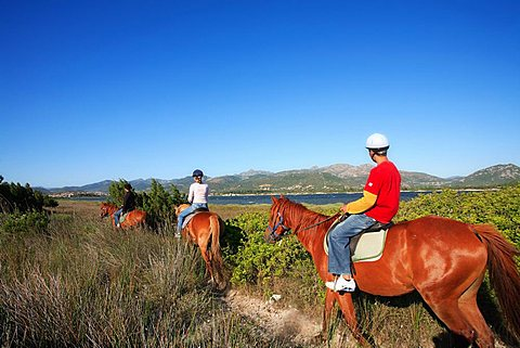 Horses, Stagno di San Teodoro moist area with Tavolara island in the background, Sardinia, Italy, Europe