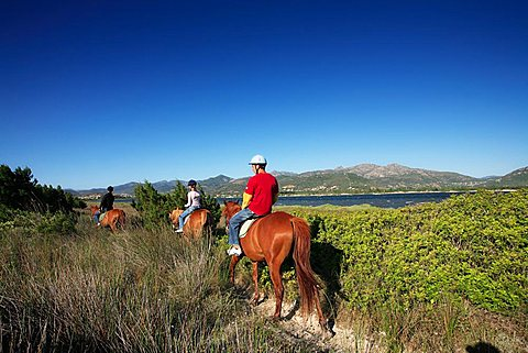 Horses, Stagno di San Teodoro moist area with Tavolara island in the background, Sardinia, Italy, Europe