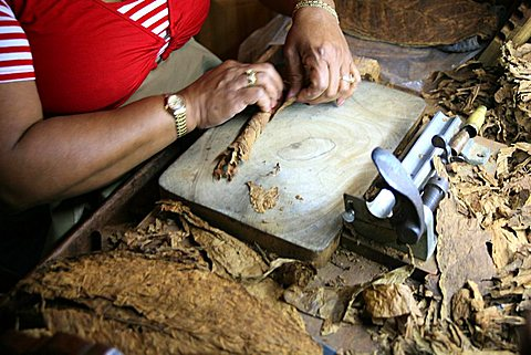 Cigar preparation, Havana, Cuba, West Indies, Central America