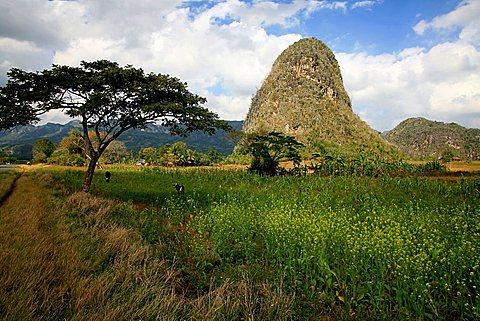 Landscape, Vi, Vinales, UNESCO World Heritage Site, Cuba, West Indies, Central America