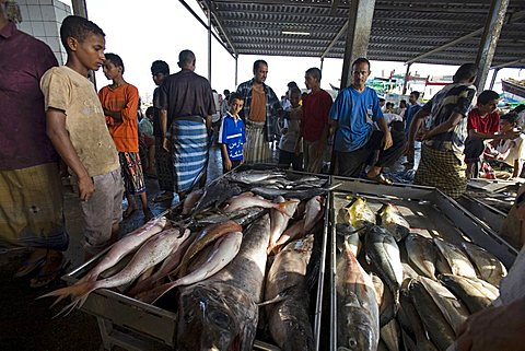 Fish market, Al Hodeidah, Yemen, Middle East