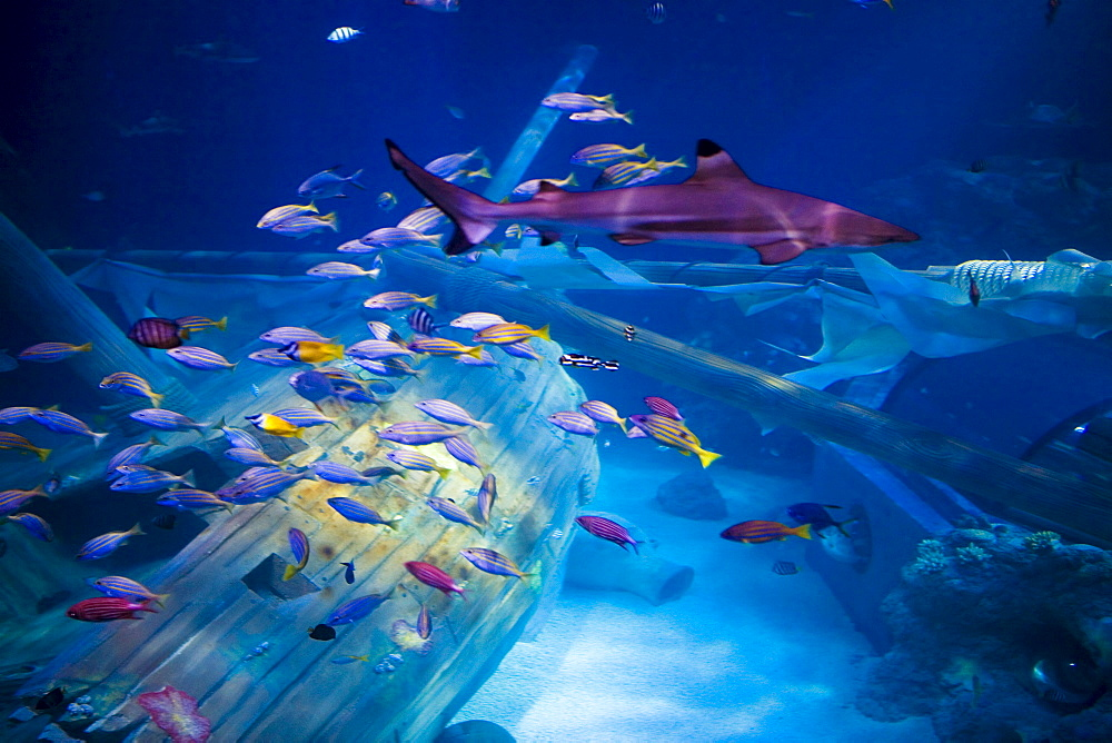 Gardaland Sea Life Aquarium, Castelnuovo del Garda, Veneto, Italy