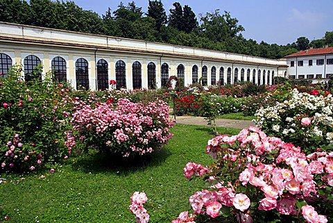 Rose-garden Niso Fumagalli, Villa Reale, Monza, Lombardy, Italy