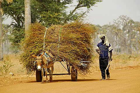 Cart pulled by donkey, Republic of Senegal, Africa