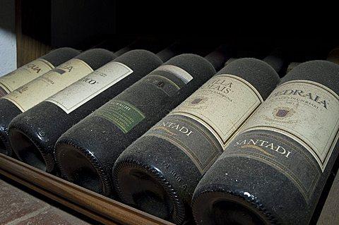 Sardinia vine, Sulcis, Iglesiente, Carbonia, Iglesias, Sardinia, Italy