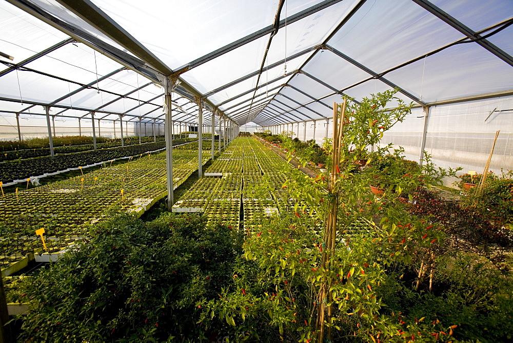 Vivaio Centro Piante greenhouse, Torchiarolo, Puglia, Italy