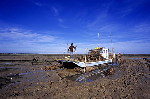Fisherman, Island of Oleron, Charente-Maritime, France, Europe