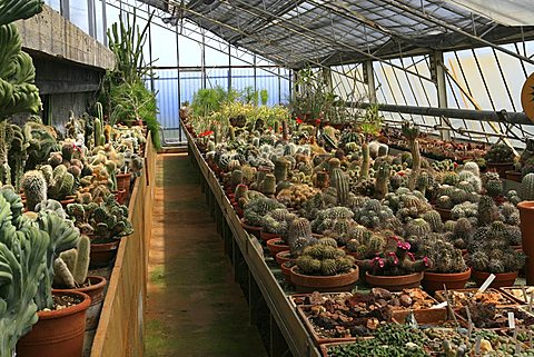 Greenhouse with cactus, botanical garden of Pallanca, Bordighera, Ligury, Italy