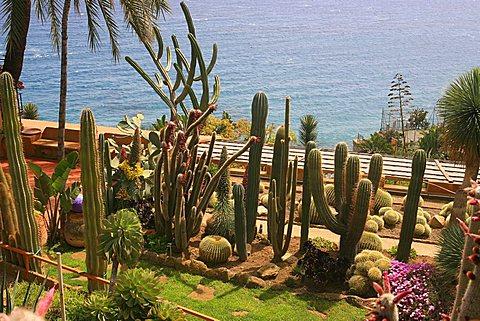 Cactus, botanical garden of Pallanca, Bordighera, Ligury, Italy