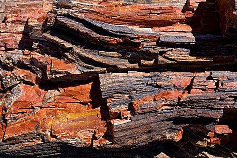 Petrified wood, Arizona, United States of America, North America