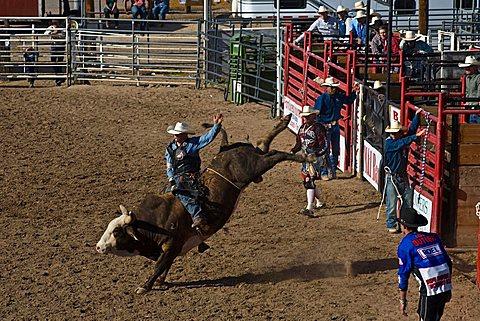 Rodeo, Buckeye, Maricopa County, Arizona, United States of America, North America