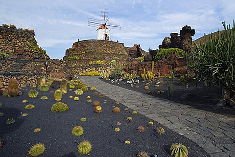 Euphorbia barnardii, Cactus garden desgned by Cesar Manrique, Guatiza, Lanzarote, Canary Islands, Spain