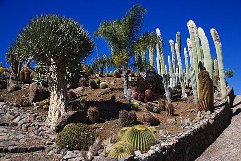 Cactualdea the biggest Cactuspark in Europe, San Nicolas de Tolentino, Gran Canaria, Canary Islands, Spain, Europe