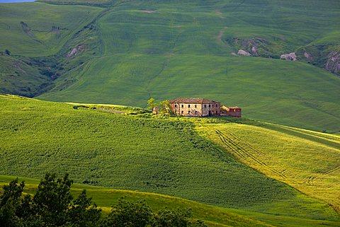 Cornfields, Crete Senesi, Tuscany, Italy