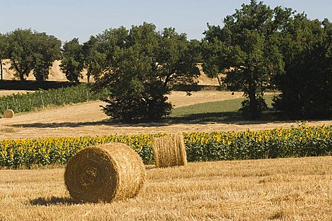 Country around Montefalco, Umbria, Italy, Europe