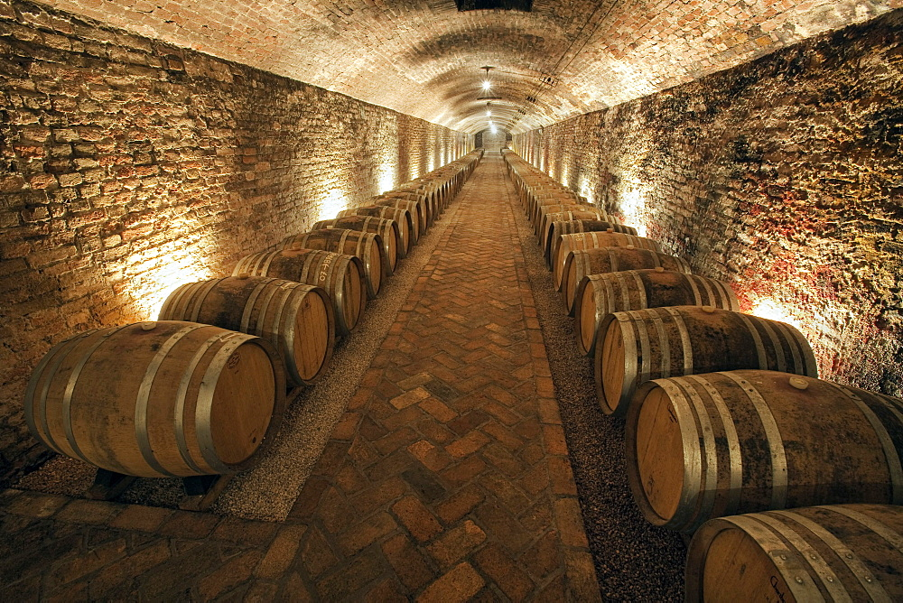 """Contratto underground wine cathedral in Canelli, the barrels made by oak wood and named """"barriques"""" where the wine is maturing, Asti, Piedmont, Italy, Europe"""