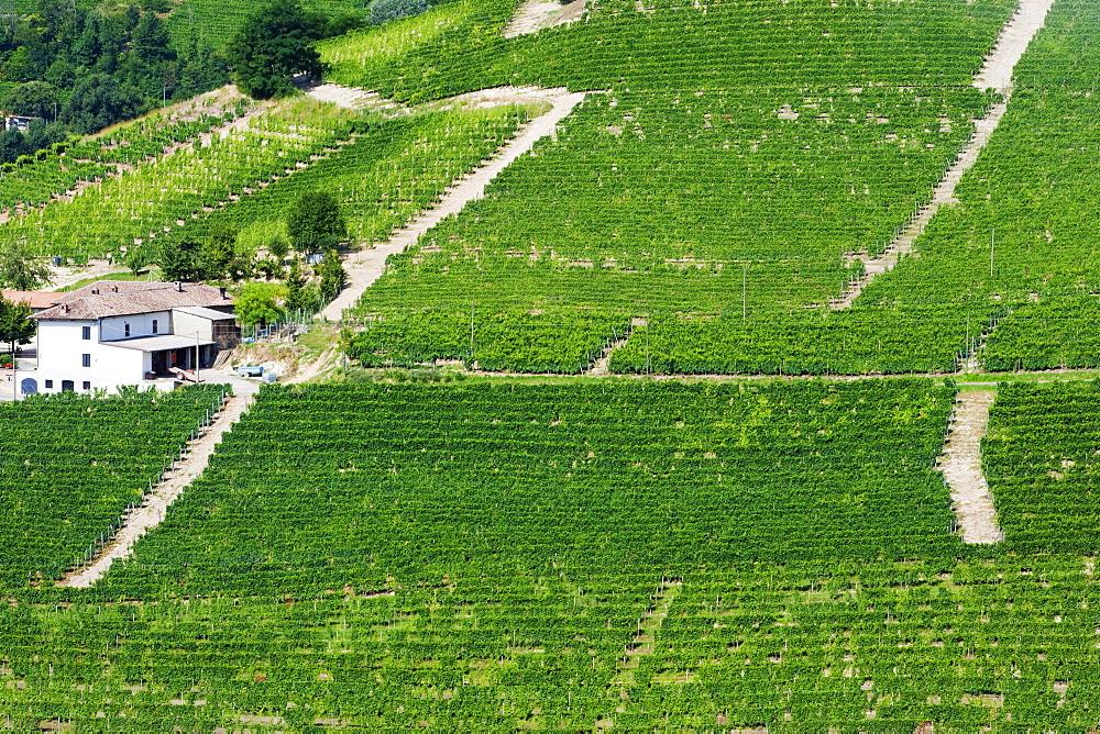 Moscato vineyards on the hills surrounding Canelli, Asti, Piedmont, Italy, Europe