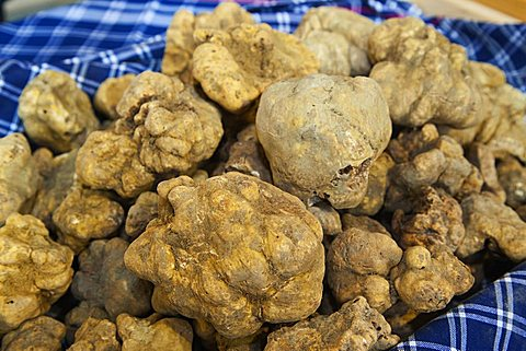 Moncalvo National  Truffle Fair, a batch of  truffles (Tuber magnatum), Asti, Piedmont, Italy, Europe