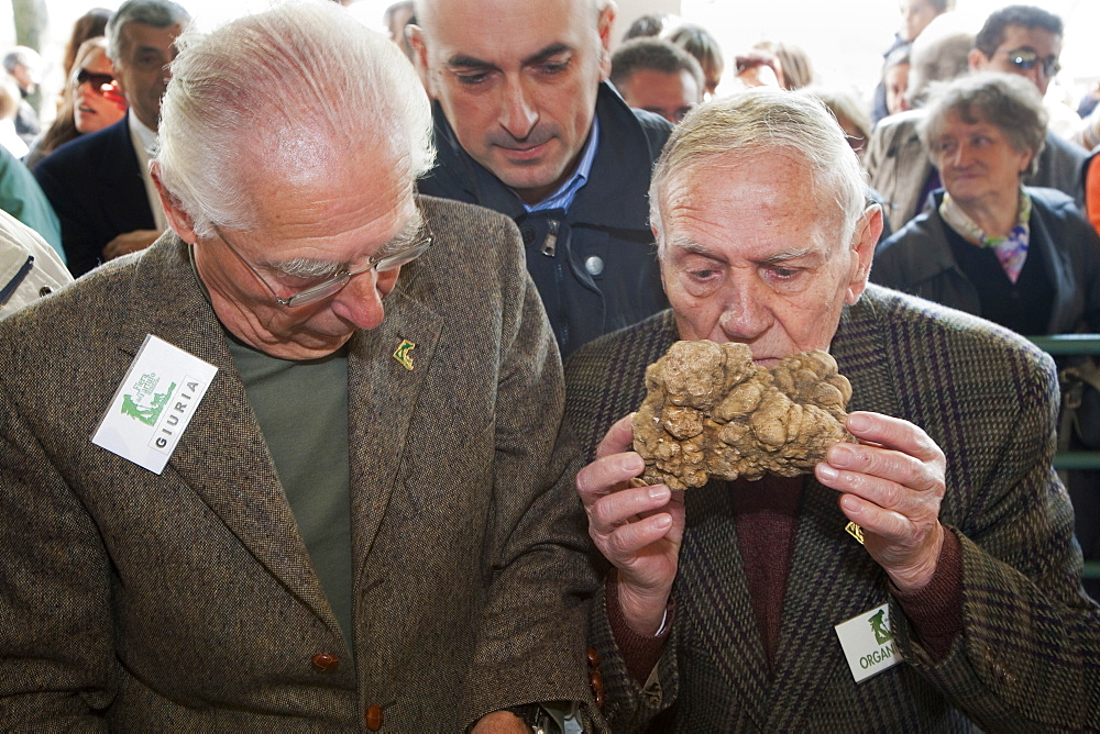Moncalvo National  Truffle Fair,  evaluation of the white truffles (Tuber magnatum) entering the contest, Asti, Piedmont, Italy, Europe