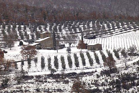 Foreshortening, Chianti country,Tuscany,Italy, Europe