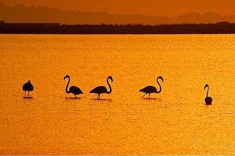 Capoterra lagoon, Cagliari, Sardinia, Italy, Europe