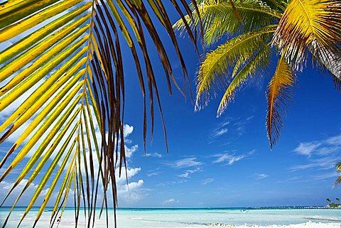 Isla Mujeres, Yucatan, Mexico, America