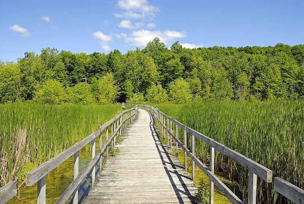 Wood bridge in the swamp, Oka National Park, Quebec, Canada