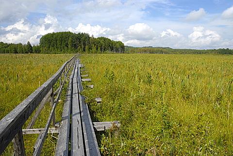 Wood path over the swamp, Siikalahti Park, Lappeenranta, South Karelia, Finland, Scandinavia, Europe