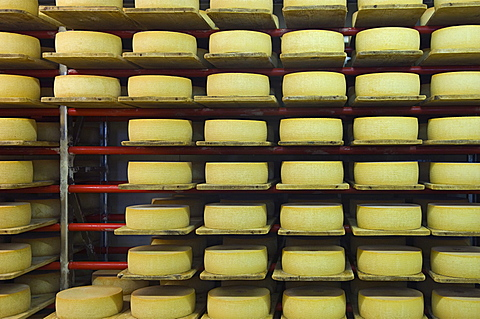typical cheeses, samnaun, switzerland