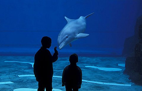 Children and dolphins, Aquarium, Genoa, Liguria, Italy