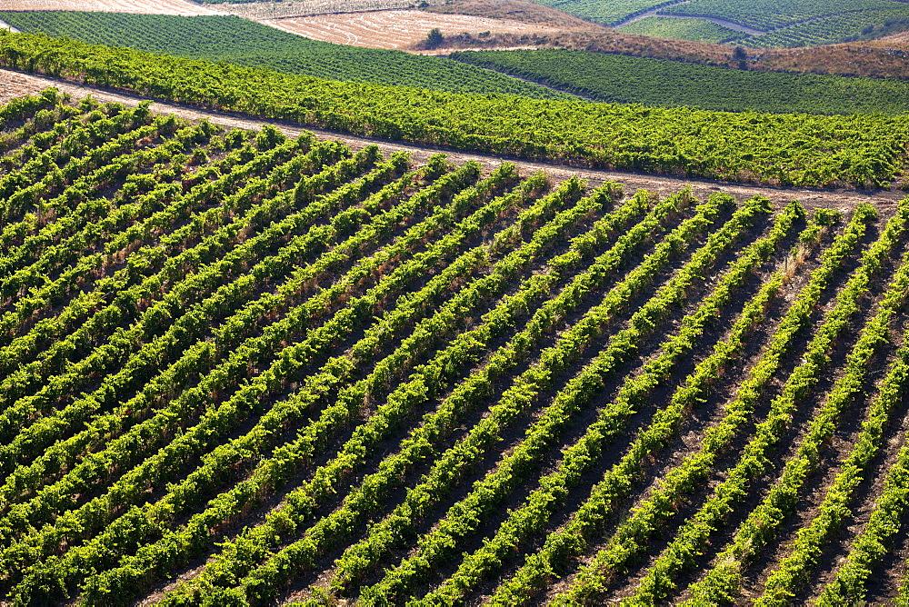 Vineyards, Mandrarossa, Cellar Settesoli, Menfi, Sicily, Italy, Europe