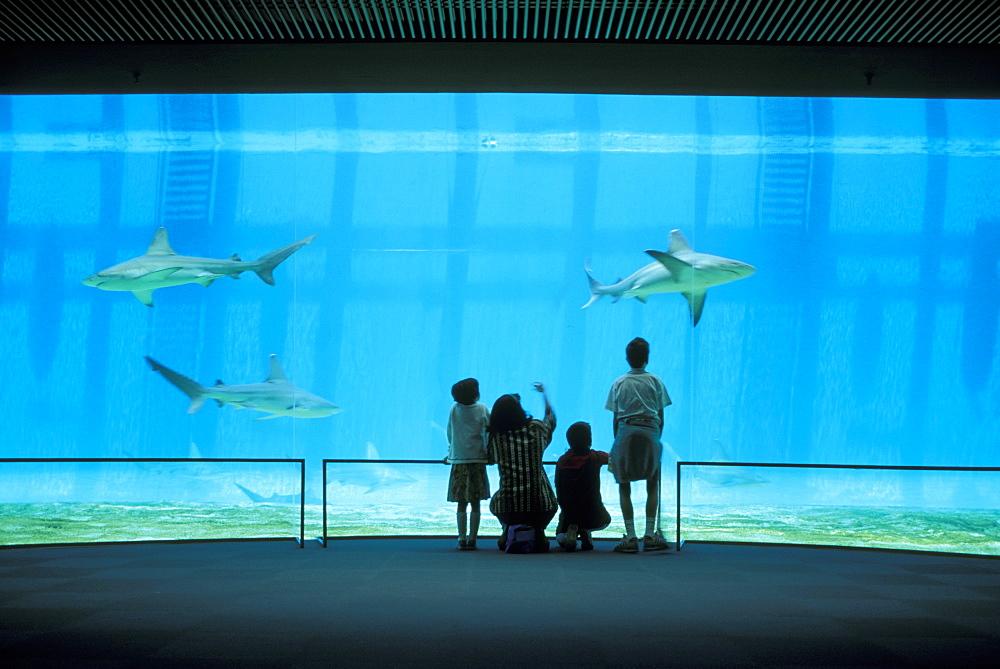 aquarium and sharks, genoa, italy