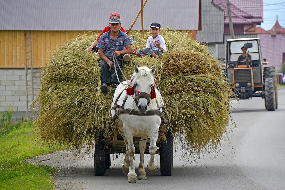 Countryman, Humorolui, Bucovina, Romania, Europe