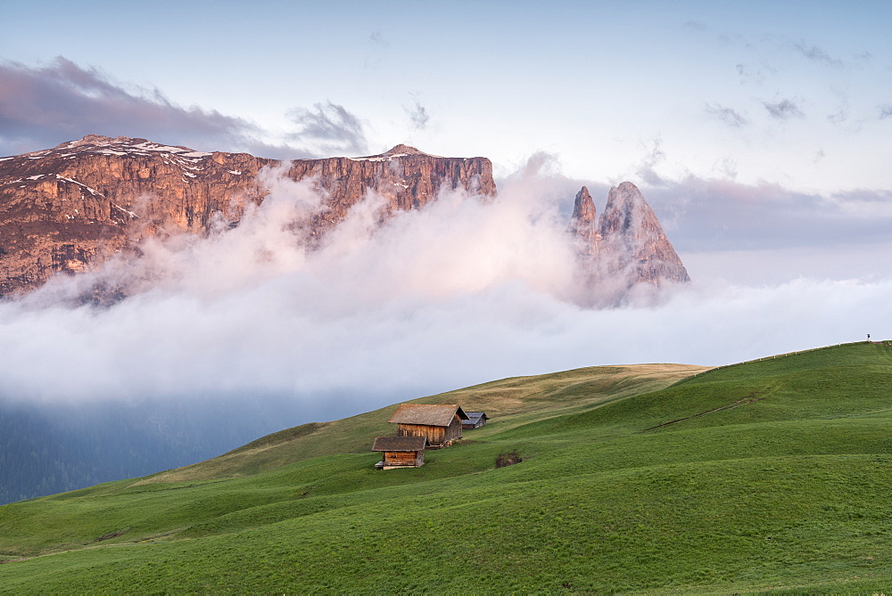 Alpe di Siusi/Seiser Alm, Dolomites, Alto Adige, Italy, Europe. Sunrise on the Seiser Alm / Alpe di Siusi. In the background the peaks of Sciliar/Schlern, Euringer and Santner