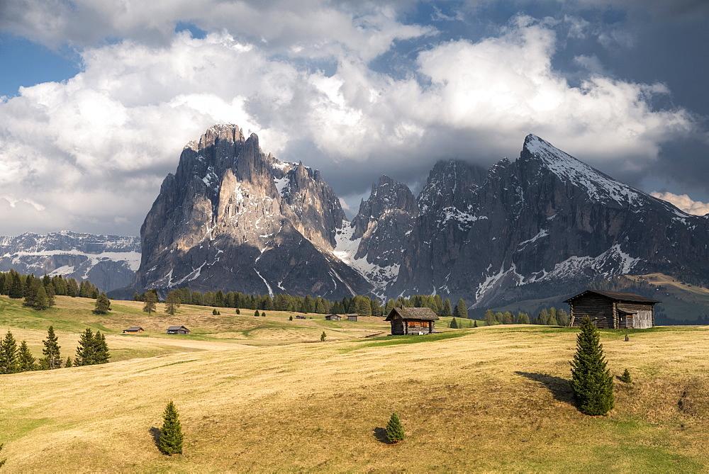 Alpe di Siusi/Seiser Alm, Dolomites, Alto Adige, Italy, Europe. View from the Alpe di Siusi to the peaks of Sassolungo/Langkofel and Sassopiatto / Plattkofel
