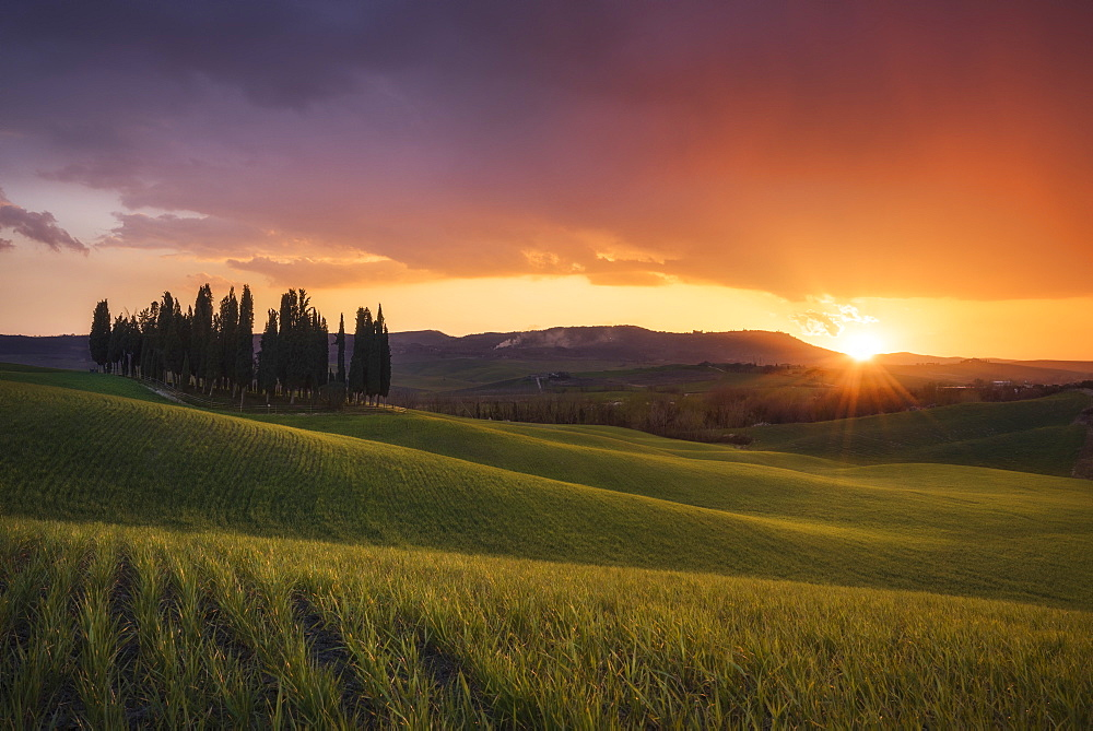 Countryside, San Quirico d'Orcia, Val d'Orcia, Tuscany, Italy, Europe - 746-87918
