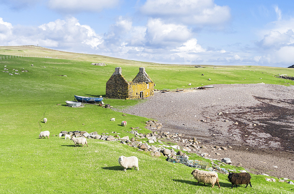 Landscape on the Eshaness peninsula, the old haaf fishing station at Stenness. haaf fishing in open boats (sixern or sixereens) was a major source of income in Shetland around 1900.  europe, central europe, northern europe, united kingdom, great britain, scotland, northern isles,shetland islands, May
