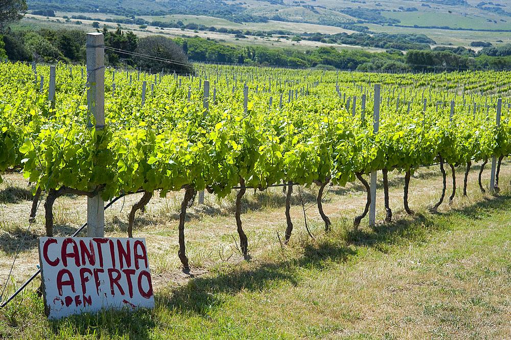 Agriturismo Campesi, winery, Aglientu, Sardinia, Italy, Europe