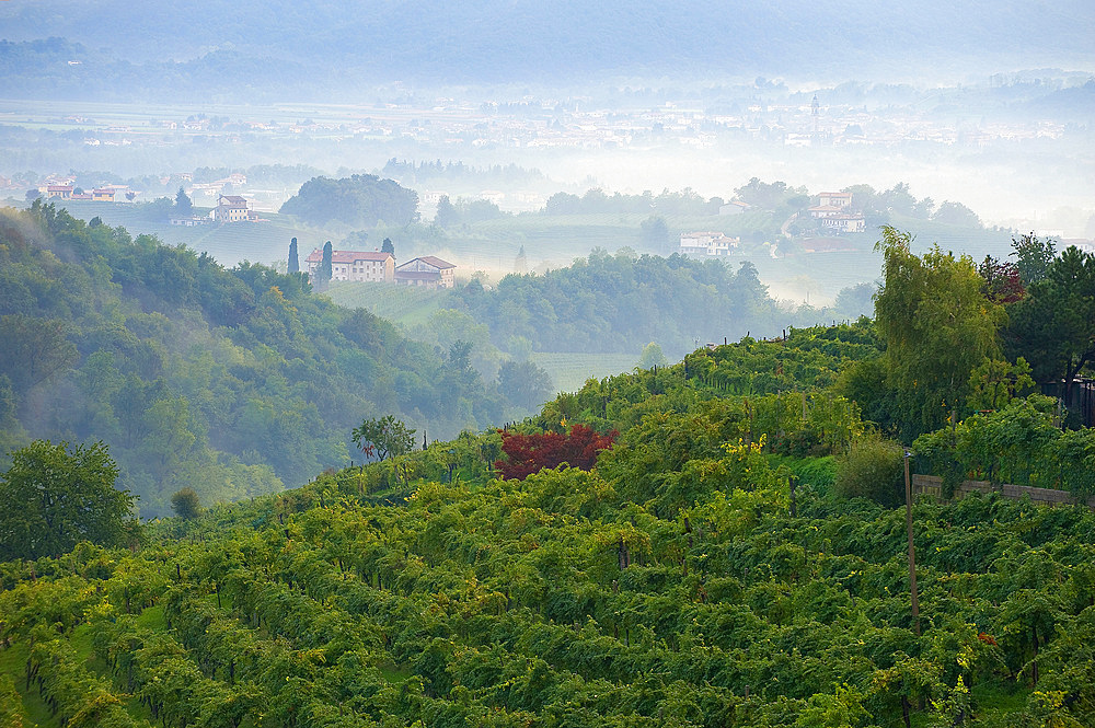 Vineyards and white wine road, Valdobbiadene, Treviso, Italy, Europe