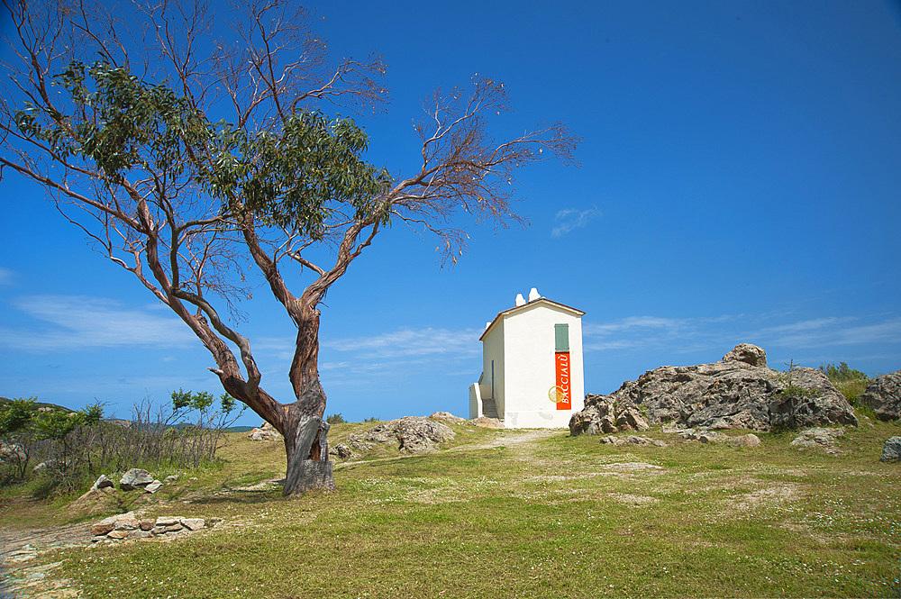 Baccialù, San Pietro di Tenda, Corsica, France, Europe