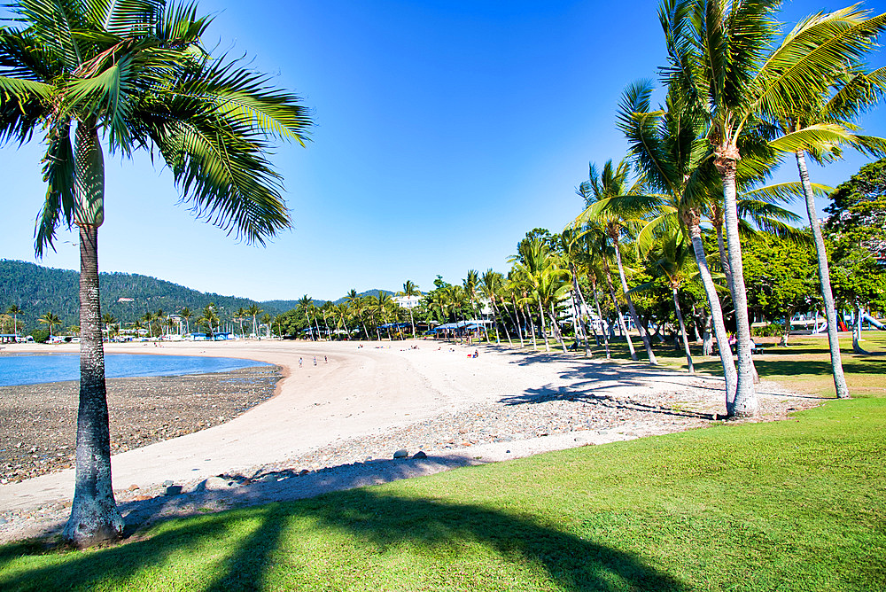 Fairy Tree Park in Airlie Beach, Australia.