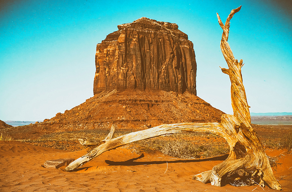 Dead tree in Monument Valley.