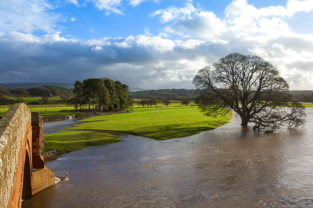 Floodwaters, Lazonby Bridge, River Eden, Eden Valley, Cumbria, England, United Kingdom, Europe