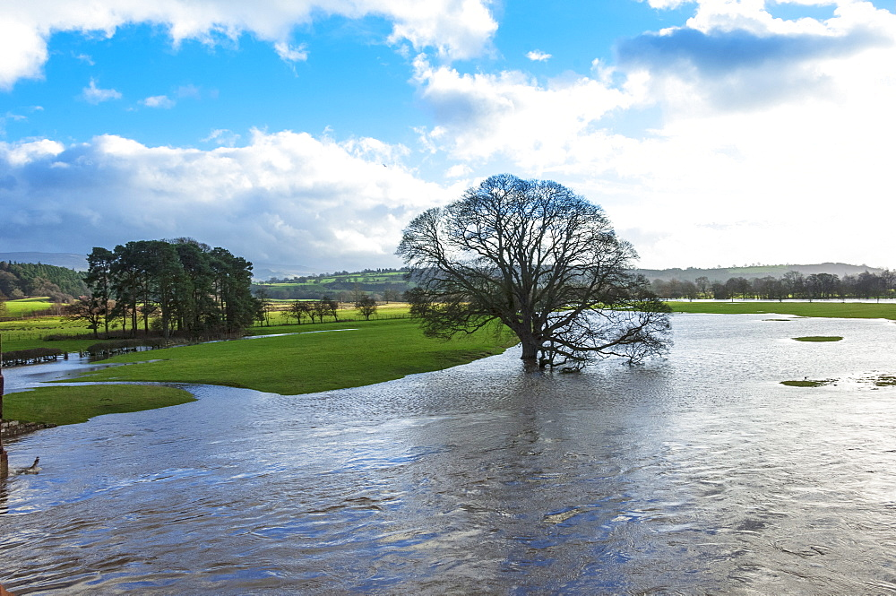 Floodwaters, River Eden, Eden Valley, Cumbria, England, United Kingdom, Europe