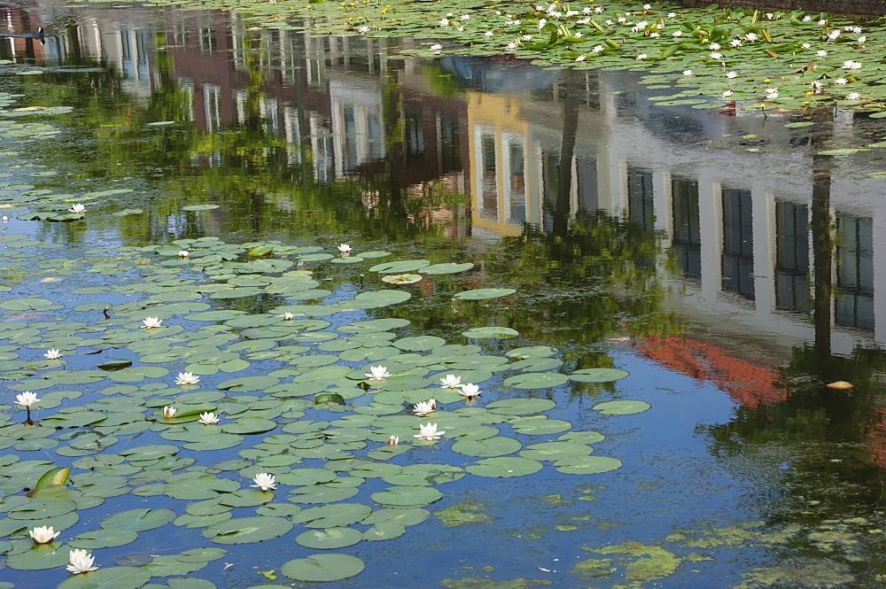 Canal scene with reflections and floating lilies, Delft, Holland, Europe