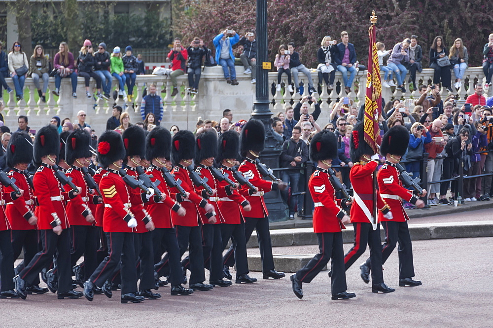 Band of the Coldstream Guards with their Standard, during Changing of the Guard, Buckingham Palace, London, England, United Kingdom, Europe - 747-1864