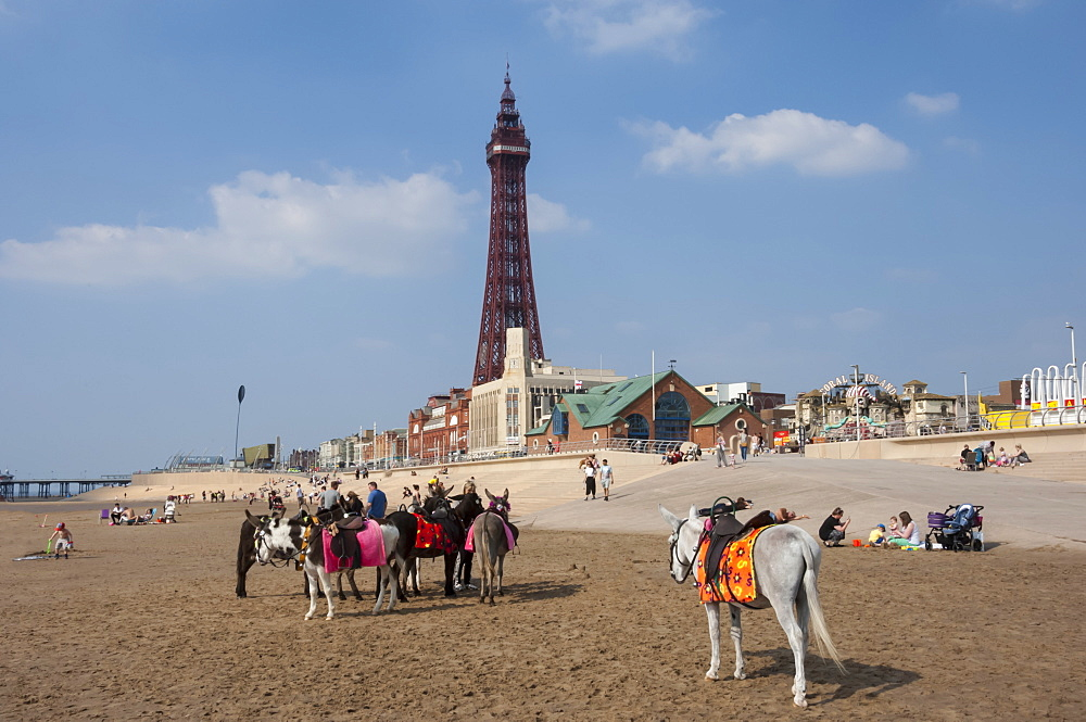 Blackpool Tower, donkeys on the beach, Blackpool, Lancashire, England, United Kingdom, Europe