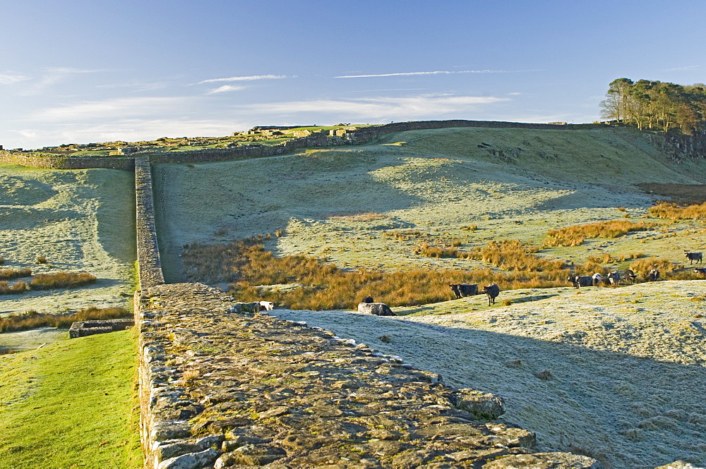 Hadrians Wall and Housesteads Roman Fort, UNESCO World Heritage Site, Northumbria, England, United Kingdom, Europe
