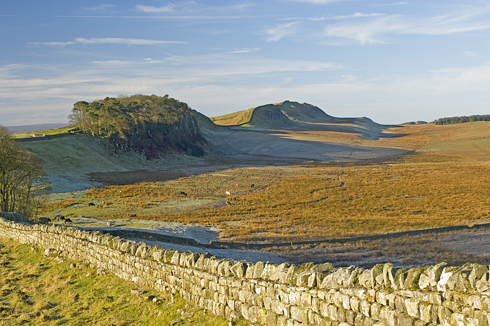 Looking west to Housesteads Wood and Crag, Cuddy and Hotbank Crags, Hadrians Wall, UNESCO World Heritage Site, Northumbria, England, United Kingdom, Europe