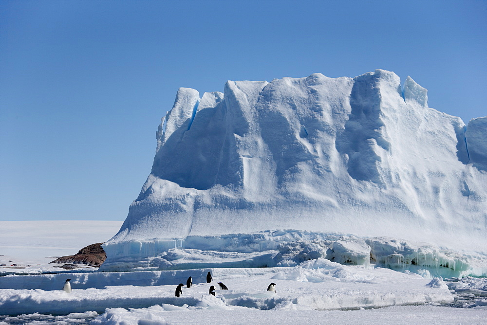 Adelie penguins (Pygoscelis adeliae), in front of an iceberg, Dumont d'Urville, Antarctica, Polar Regions